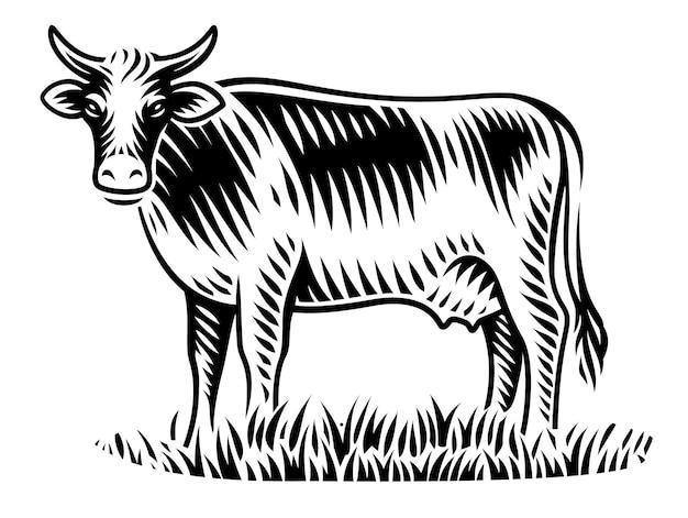 Un'illustrazione in bianco e nero della mucca nello stile dell'incisione su fondo bianco Vettore Premium