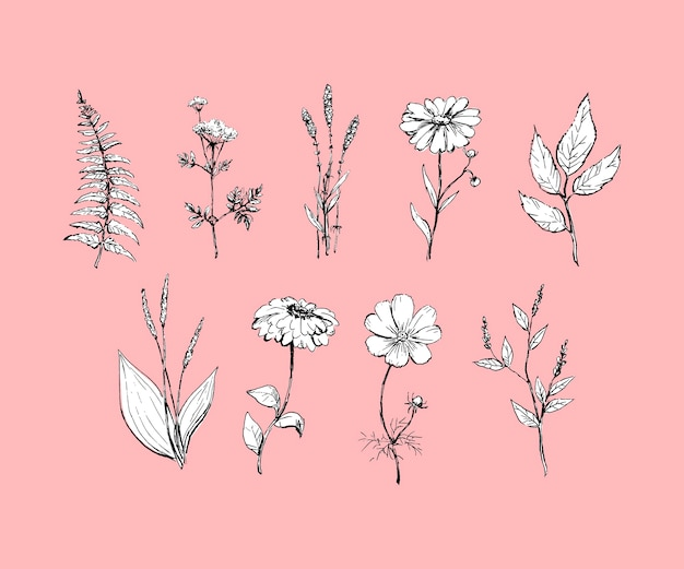 Botanica. impostato. fiori vintage. stile di incisione Vettore Premium