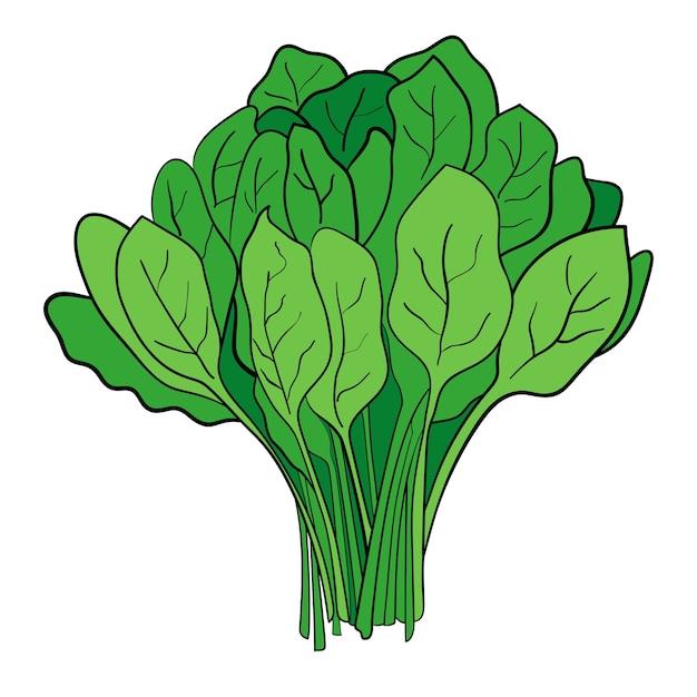 Un pacco di spinaci Vettore Premium