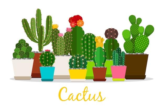 Cactus, piante grasse nell'illustrazione dei vasi Vettore Premium
