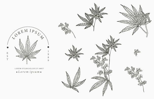 Collezione di cannabis. Vettore Premium
