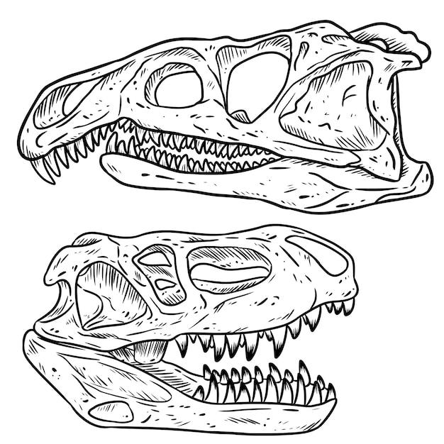 Insieme di schizzo disegnato a mano di linea di teschi di dinosars carnivoro Vettore Premium