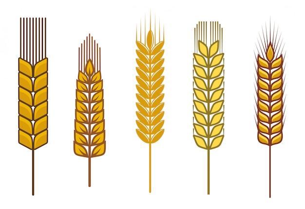Semi di cereali e simboli isolati su bianco Vettore Premium