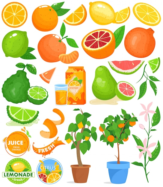 Set di illustrazione vettoriale di agrumi. Vettore Premium