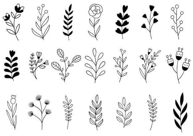 Collezione foresta felce eucalipto arte fogliame foglie naturali erbe in stile linea. illustrazione elegante di bellezza decorativa per fiore disegnato a mano di progettazione Vettore Premium
