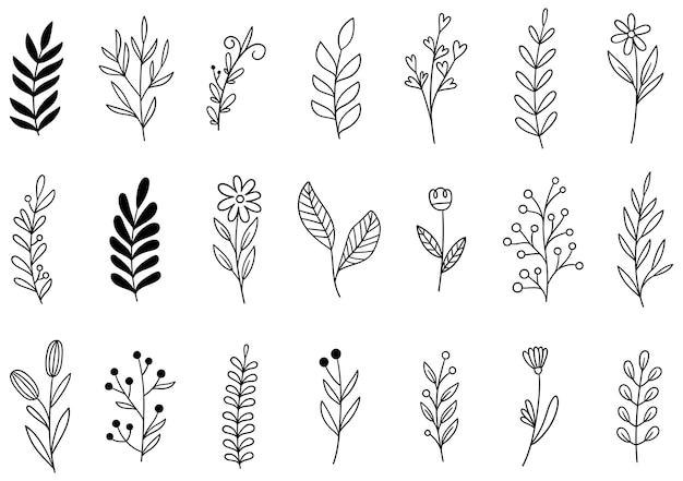 Collezione foresta felce eucalipto arte fogliame Vettore Premium