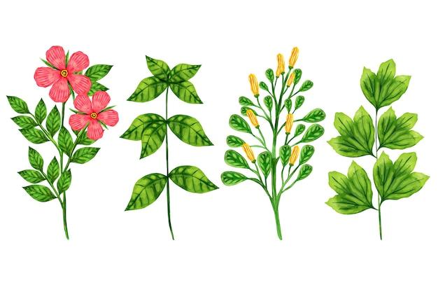 Erbe botaniche colorate e fiori selvatici Vettore Premium