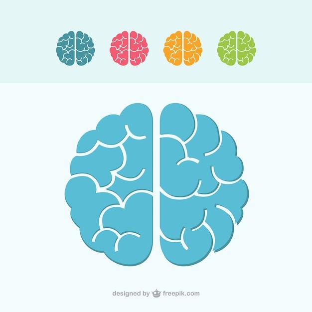 Icone colorate del cervello Vettore Premium