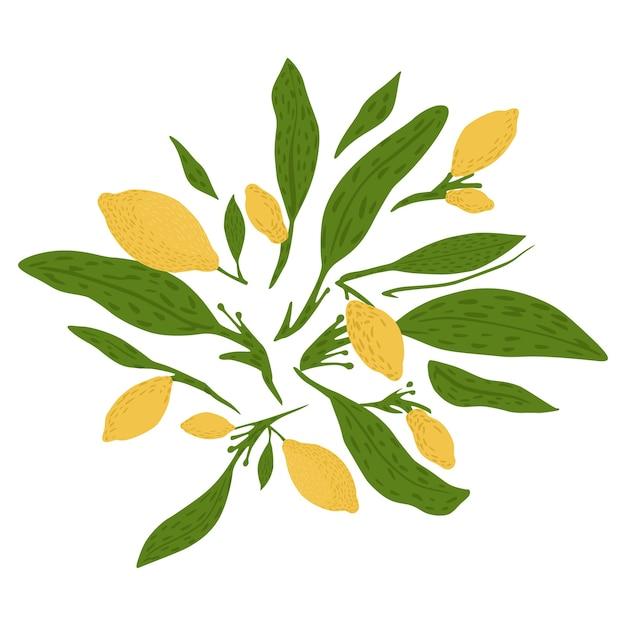 Composizione da limone, ramoscelli e fogliame su sfondo bianco. disegnato a mano in stile doodle. Vettore Premium