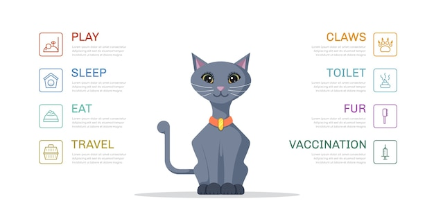 Illustrazione sveglia dei bisogni del gatto. modello di infografica per negozio di animali Vettore Premium