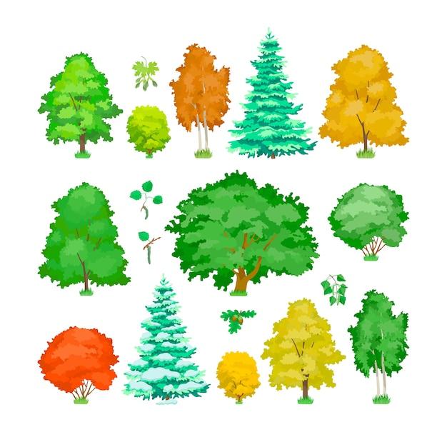 Simpatiche piante legnose, eco pioppo, acero, quercia, betulla, abete rosso. Vettore Premium
