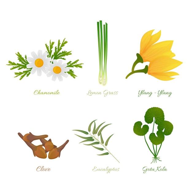 Set dettagliato di erbe di olio essenziale Vettore Premium