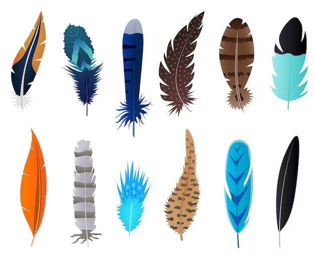 Set di piume dettagliate uccello Vettore Premium