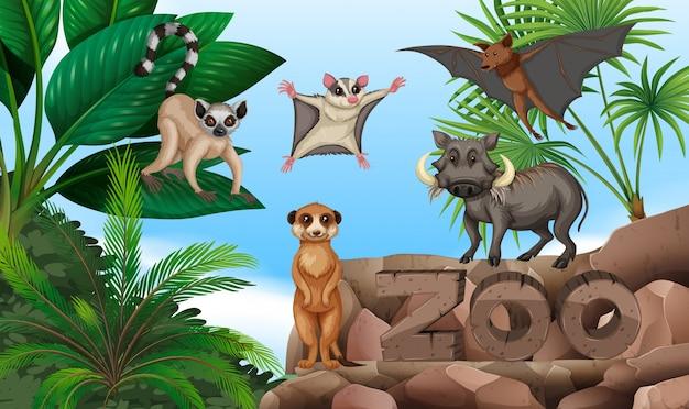 Diversi tipi di animali selvatici nello zoo Vettore Premium