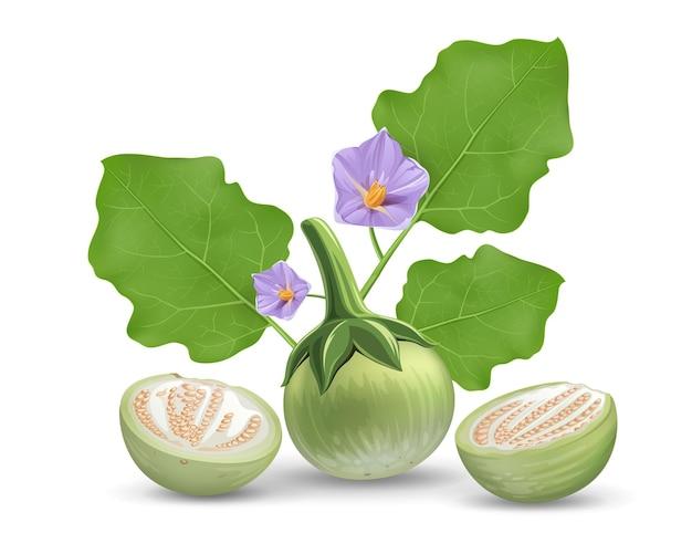 Vettore di melanzane, congedo e fiore viola, design realistico a metà taglio melanzana, isolato su priorità bassa bianca Vettore Premium