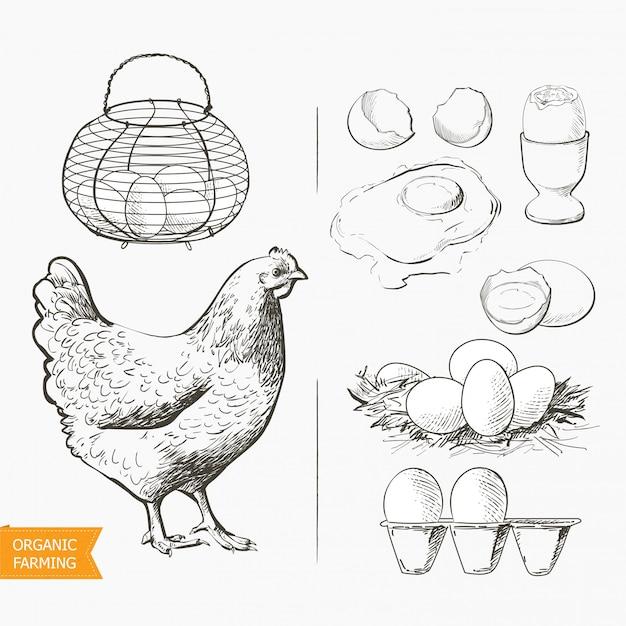 Uova nel cestino Vettore Premium