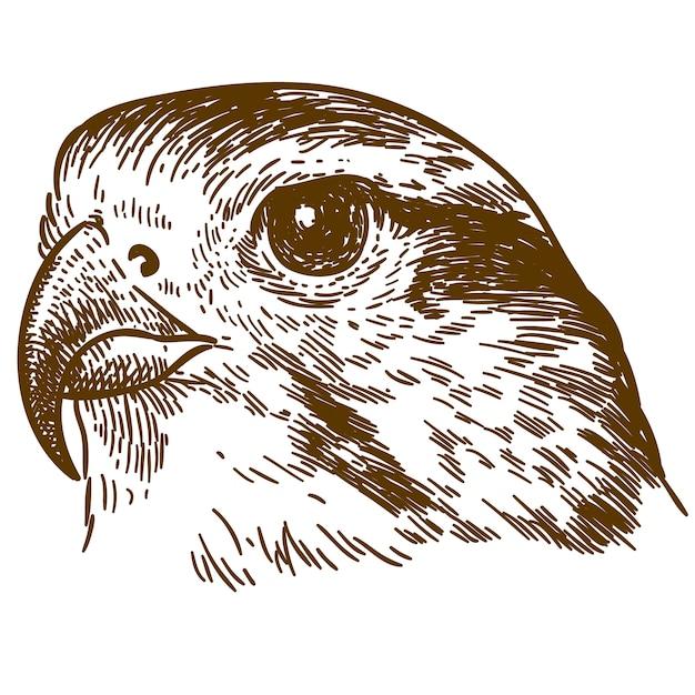 Illustrazione del disegno dell'incisione della testa del falco Vettore Premium
