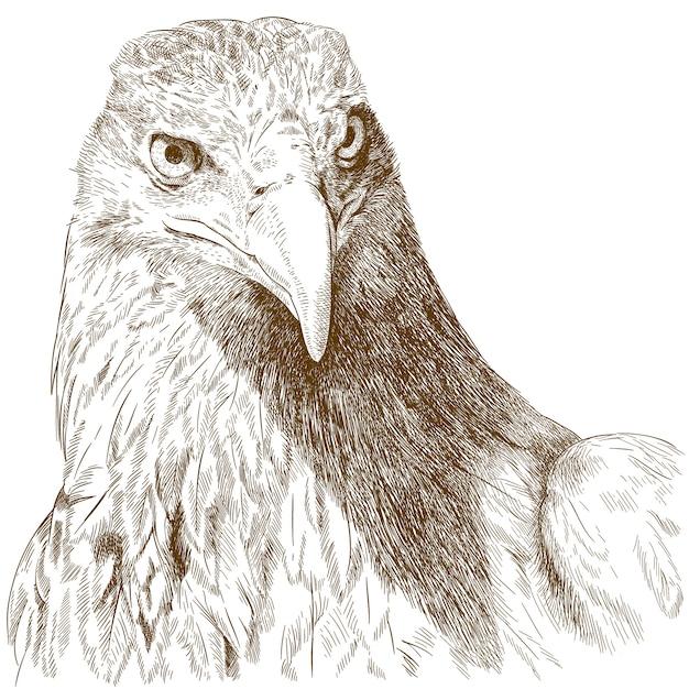 Illustrazione dell'incisione della testa della grande aquila Vettore Premium