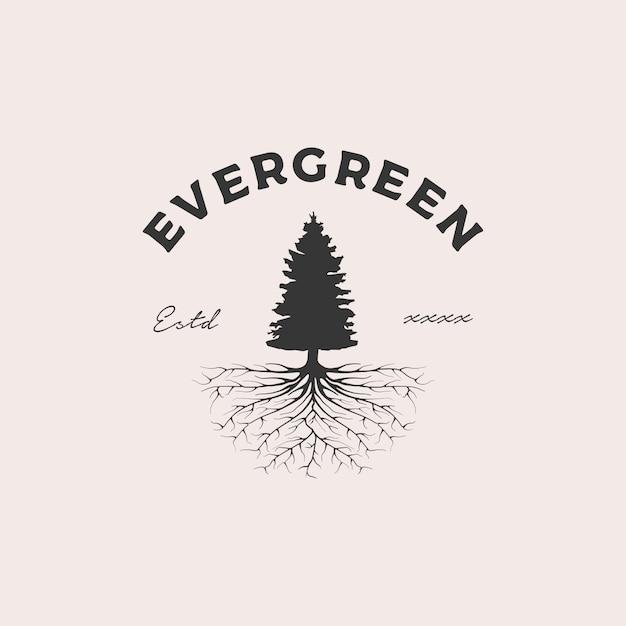 Illustrazione sempreverde di progettazione di logo del distintivo della radice Vettore Premium