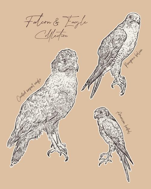 Falco e aquila disegnano a mano schizzo. Vettore Premium