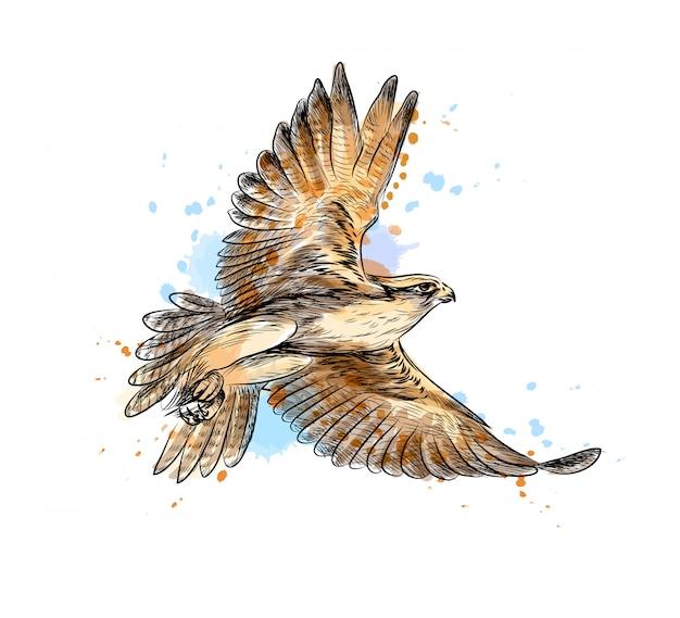 Falco in volo da una spruzzata di acquerello, schizzo disegnato a mano. illustrazione vettoriale di vernici Vettore Premium