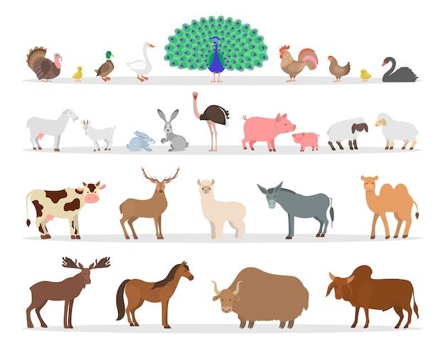 Set di animali e uccelli da fattoria. collezione di animali di campagna. anatra e pollo, capra e pecora. allevamento di animali esotici. illustrazione Vettore Premium