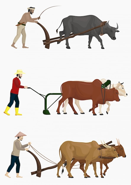Gli agricoltori arano il campo con il set vettoriale di buoi Vettore Premium