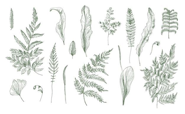 Collezione realistica di felci. set di germogli, fronde, foglie e steli disegnati a mano. illustrazione in bianco e nero Vettore Premium