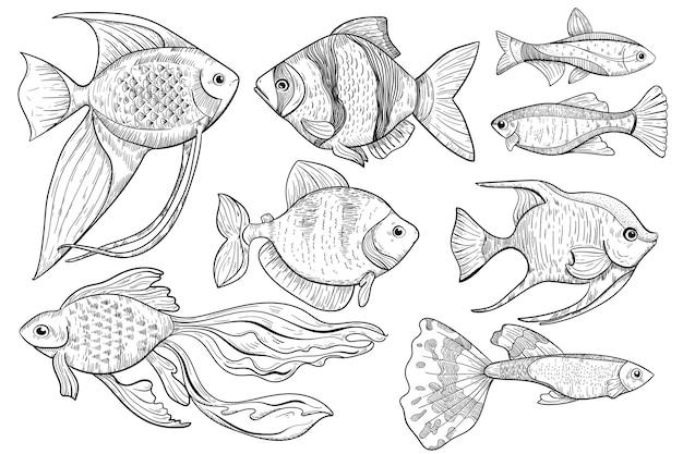Schizzo di pesce. illustrazione di schizzo animale pesce d'acqua dolce e oceano in stile inciso. articolo di sport di cibo e pesca su sfondo bianco. icona del menu cibo creatura acqua disegnata a mano. Vettore Premium