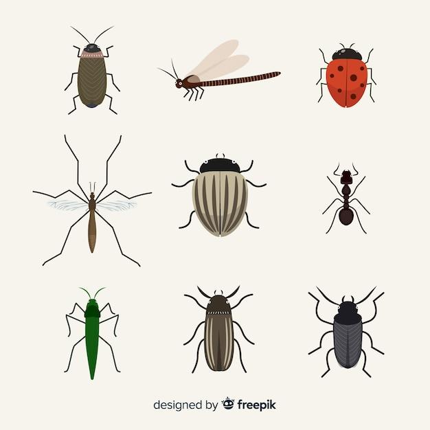 Confezione di insetti piatta Vettore Premium