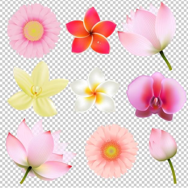 Raccolta di fiori in maglia di gradiente di sfondo trasparente, illustrazione Vettore Premium