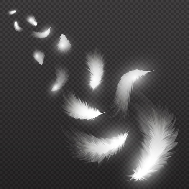 Piume di piume di volo cigno chiaro su trasparente. illustrazione. piuma bianca che cade, vola pennacchio birichino Vettore Premium