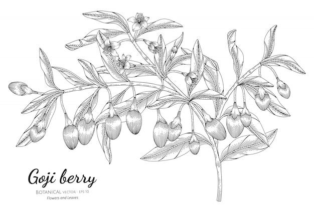 Illustrazione botanica disegnata a mano della frutta della bacca di goji con la linea arte Vettore Premium
