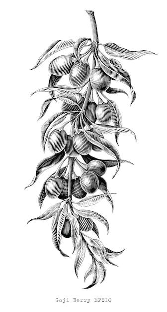 Bacca di goji disegno a mano vintage illustrazione incisione in bianco e nero clip art su bianco Vettore Premium
