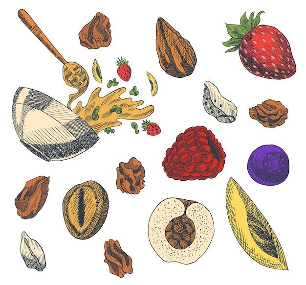 Illustrazione di stile inciso muesli. varie bacche, frutta e noci. set delizioso fatto in casa. ingredienti per preparare il muesli. colazione salutare. illustrazione disegnata a mano. Vettore Premium