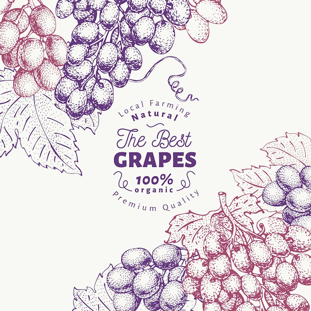Modello di progettazione uva bacca. illustrazione disegnata a mano della frutta di vettore priorità bassa botanica retro di stile inciso. Vettore Premium