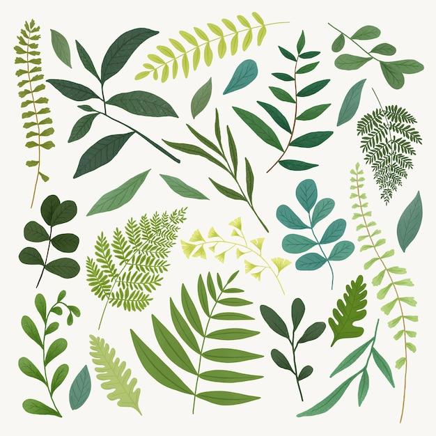 Set di foglie verdi Vettore Premium