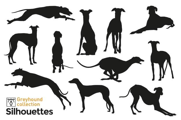 Gruppo di sagome di levriero. cani che saltano, giocano, camminano e si siedono. icone di animali domestici per il tuo. Vettore Premium