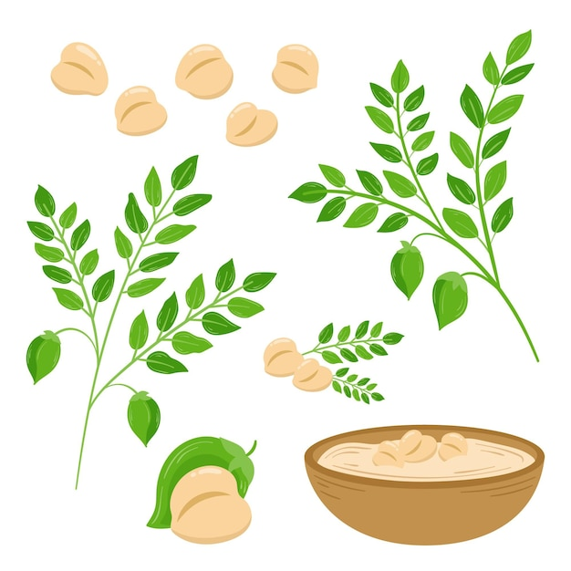 Fagioli di ceci disegnati a mano e illustrazione della pianta Vettore Premium