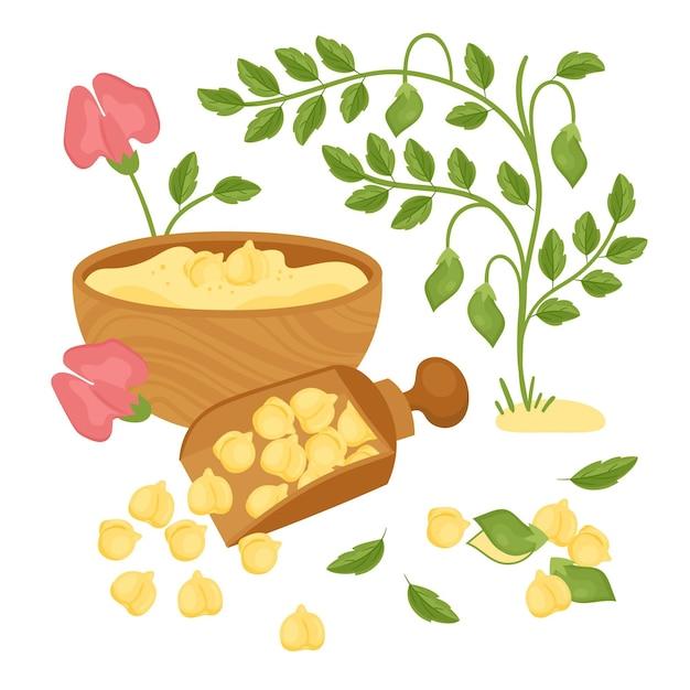 Fagioli e pianta di ceci disegnati a mano Vettore Premium