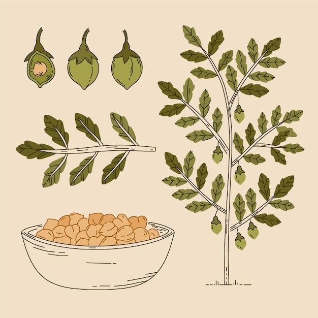 Fagioli di ceci disegnati a mano con illustrazione della pianta Vettore Premium