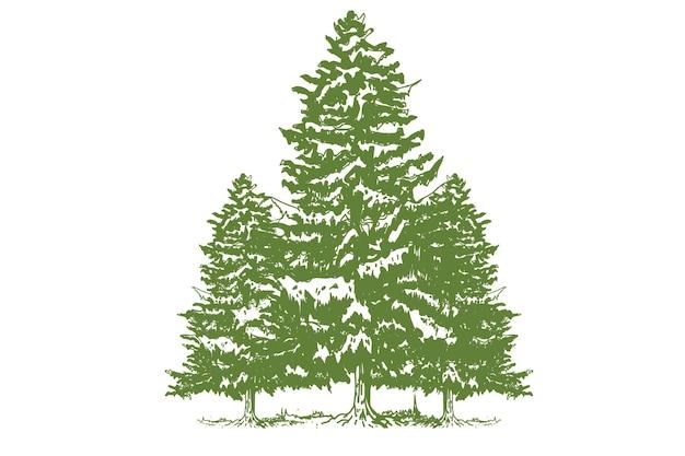 Illustrazione disegnata a mano albero sempreverde Vettore Premium