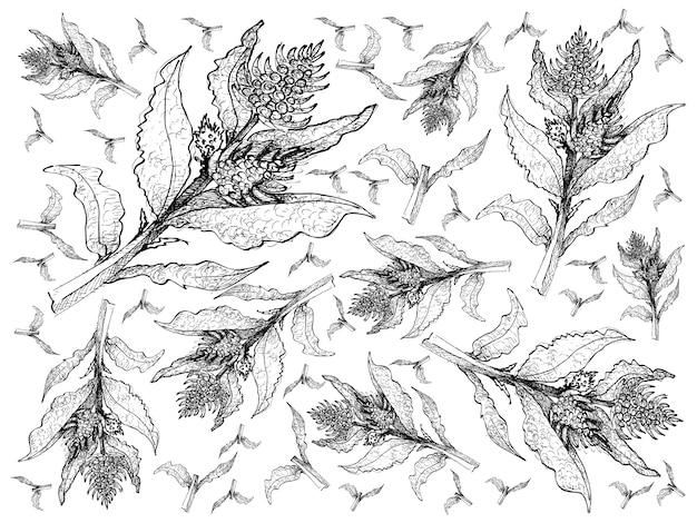 Disegnato a mano del fondo fresco delle piante della barbabietola di mare Vettore Premium