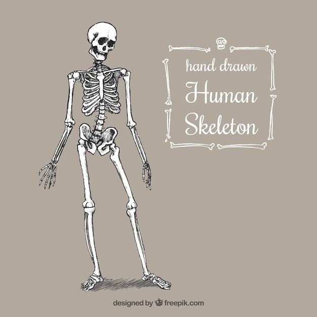 A mano scheletro umano Vettore Premium