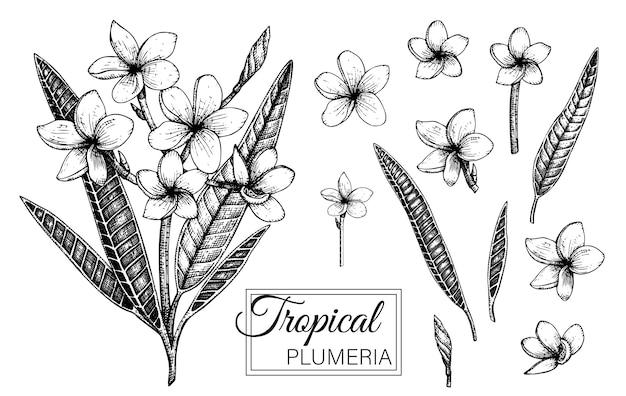 Illustrazione disegnata a mano di fiori tropicali Vettore Premium