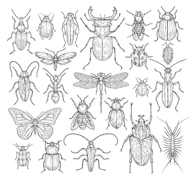 Set di insetti disegnati a mano Vettore Premium