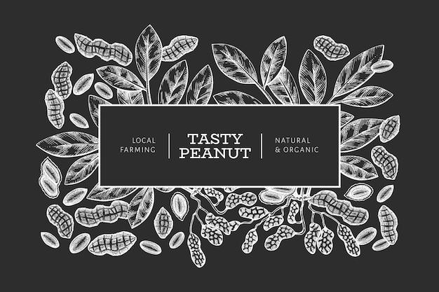 Modello di disegno disegnato a mano ramo di arachidi e noccioli. illustrazione di vettore di alimenti biologici sulla lavagna. illustrazione di dado vintage. immagine botanica in stile inciso. Vettore Premium