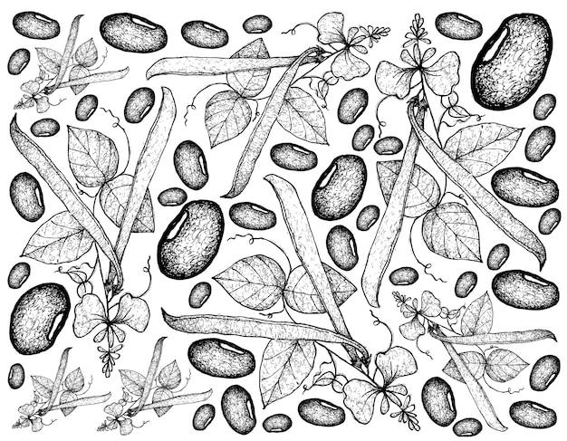 Fondo disegnato a mano delle piante del fagiolo rampicante Vettore Premium