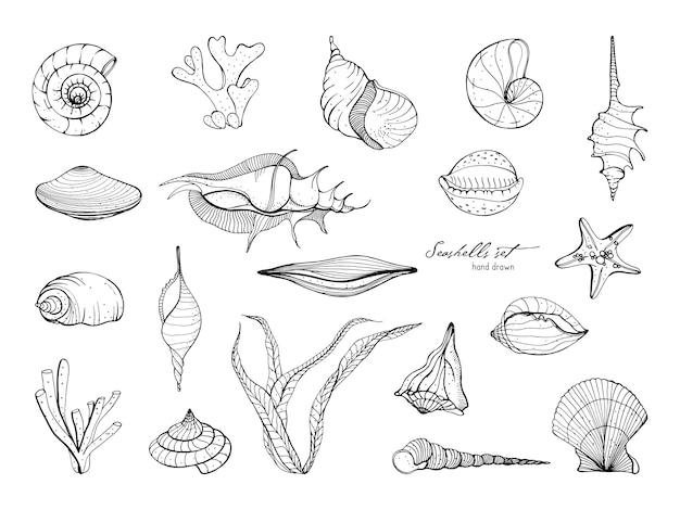 Collezione di conchiglie disegnate a mano. set di alghe, coralli, stelle marine, conchiglie. illustrazione in bianco e nero. Vettore Premium