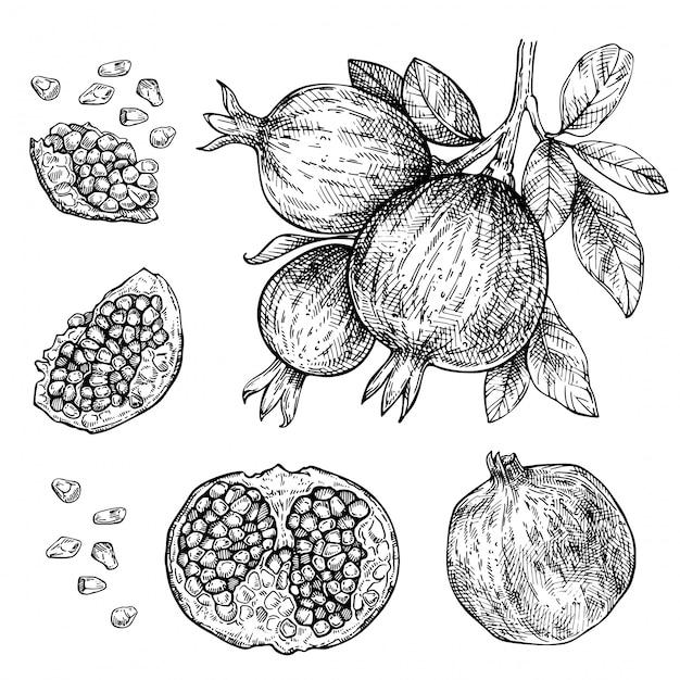 Insieme disegnato a mano di melograno. schizzo ramo di frutta melograno. inchiostro vintage illustrazione incisa di melograno tagliato e tranciato con foglie Vettore Premium